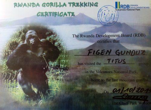 Blog-RuandaGorilSafari14