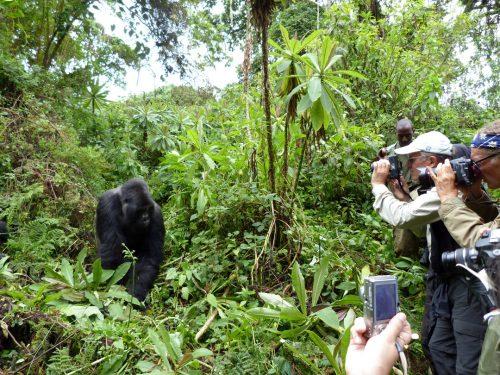 Blog-RuandaGorilSafari4
