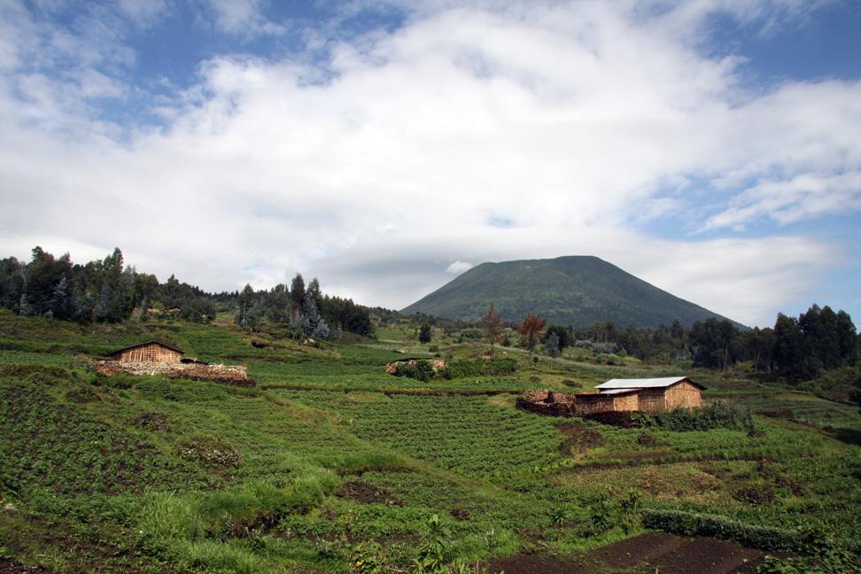 Blog-RuandaGorilSafari9