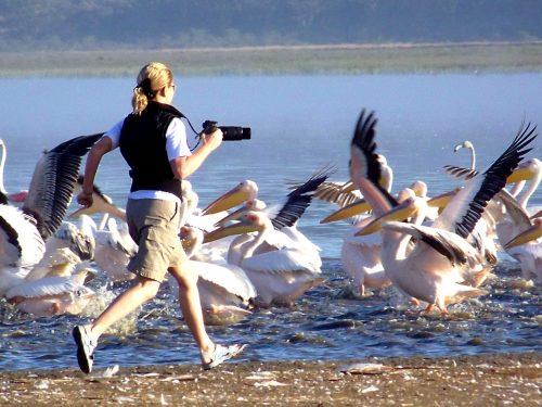 Kenya'nın ünlü parklarından Nakuru Gölü Parkı'nda pelikanlarla kovalamaca...